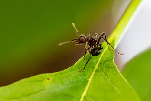 Importance of ant removal services from experts